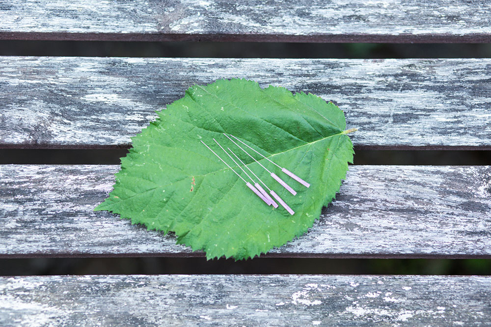 Akupunktur Rheinbach - Theobald / Kronhagel - Akupunkturnadeln auf einem Baumblatt