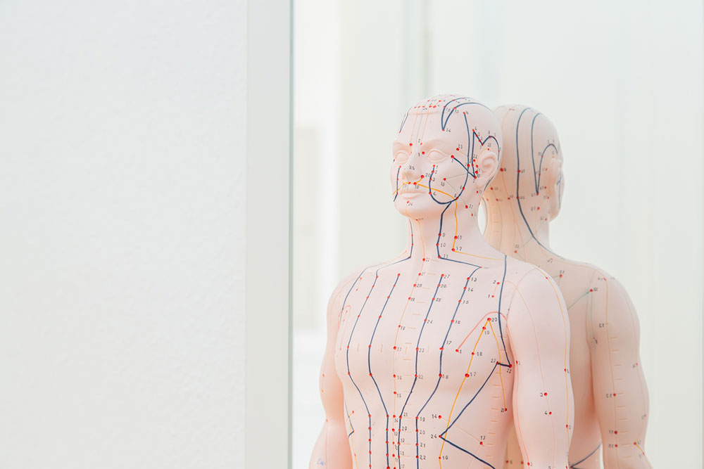 Akupunktur Rheinbach - Theobald / Kronhagel - Puppe mit Aufzeichnung der Meridiane für klassische chinesische Körperakupunktur